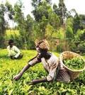 farming-agric